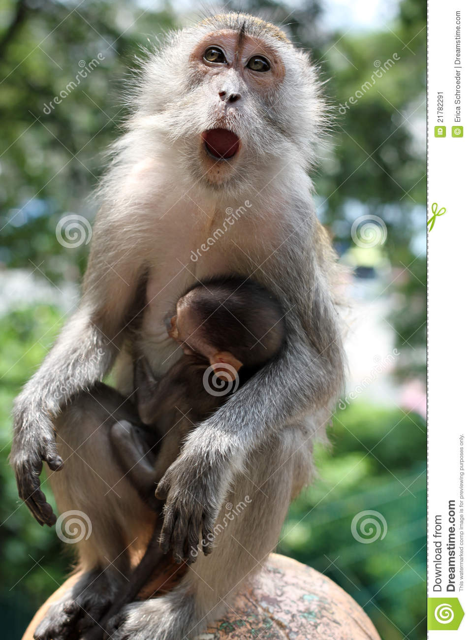 Mother Monkey With Baby Monkey In Arms Stock Image Image