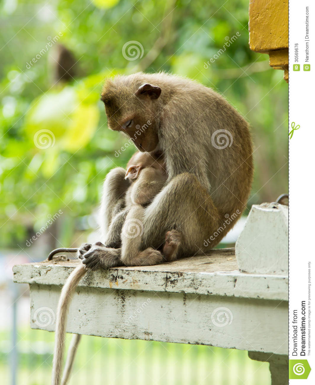 Two monkeys hugging drawing - photo#28