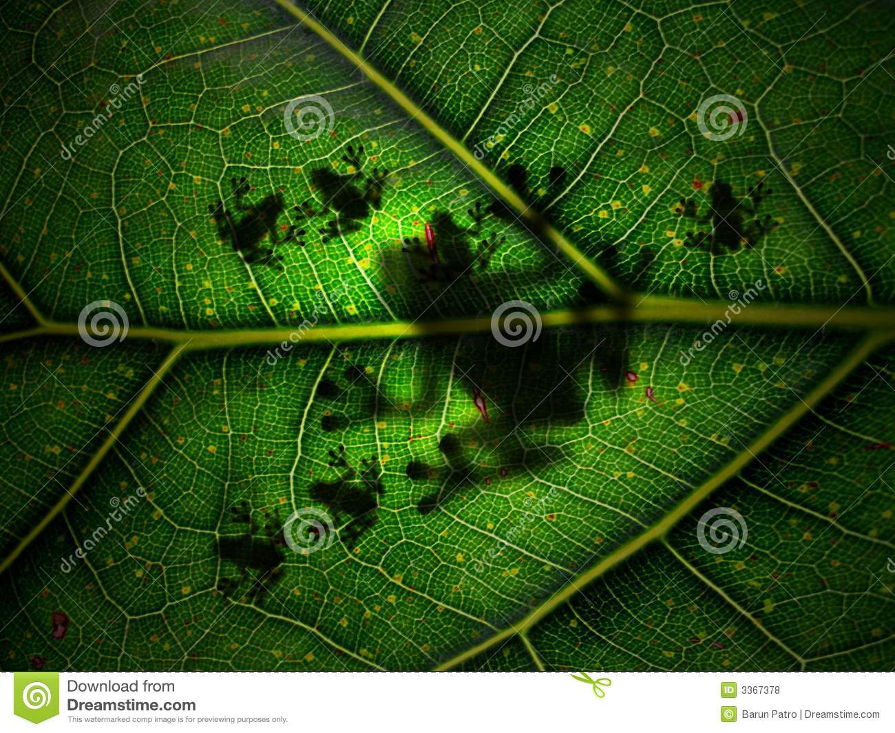 Download Mother Nature stock photo. Image of affection, calm, insect - 3367378