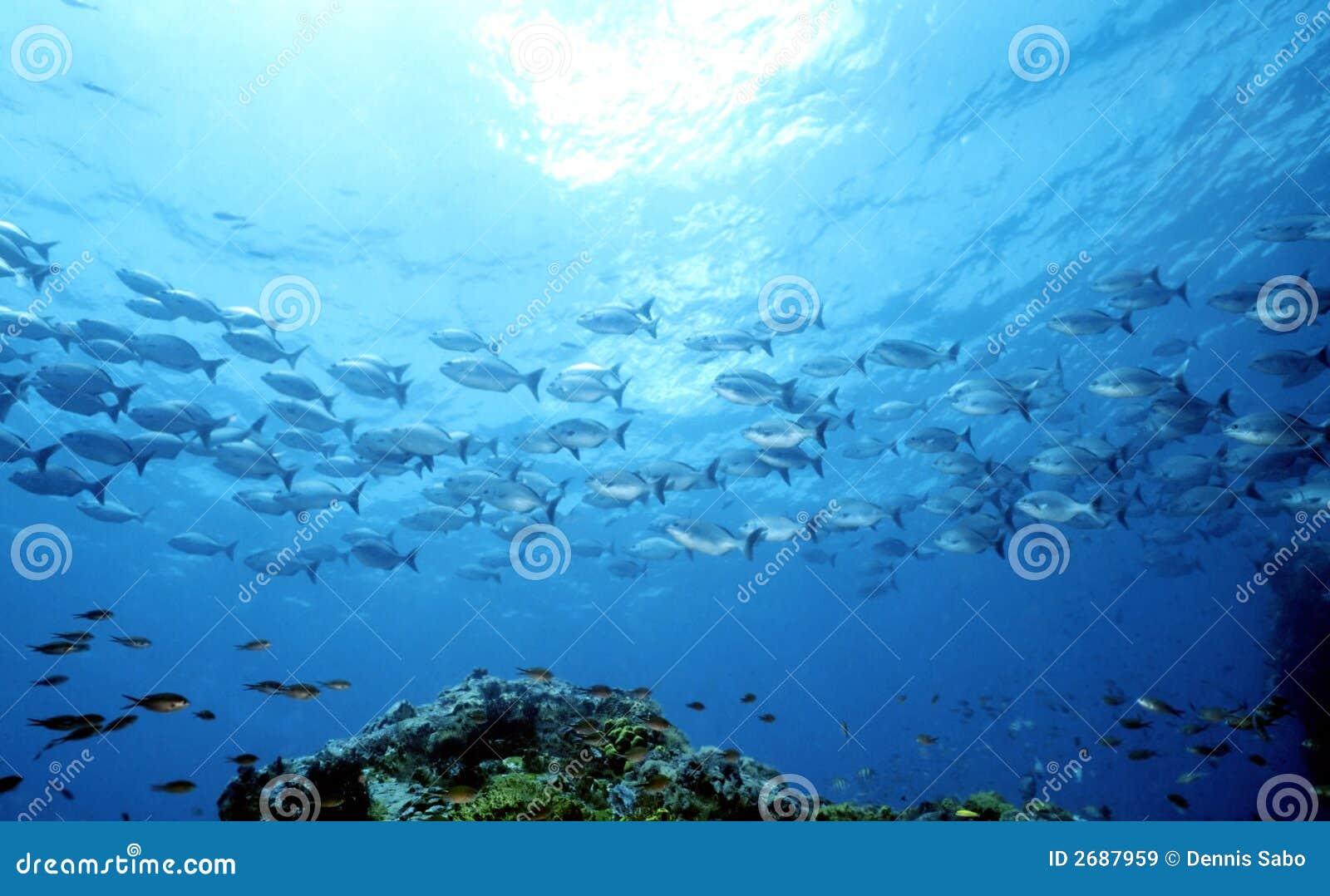 Mother Ocean Part 1