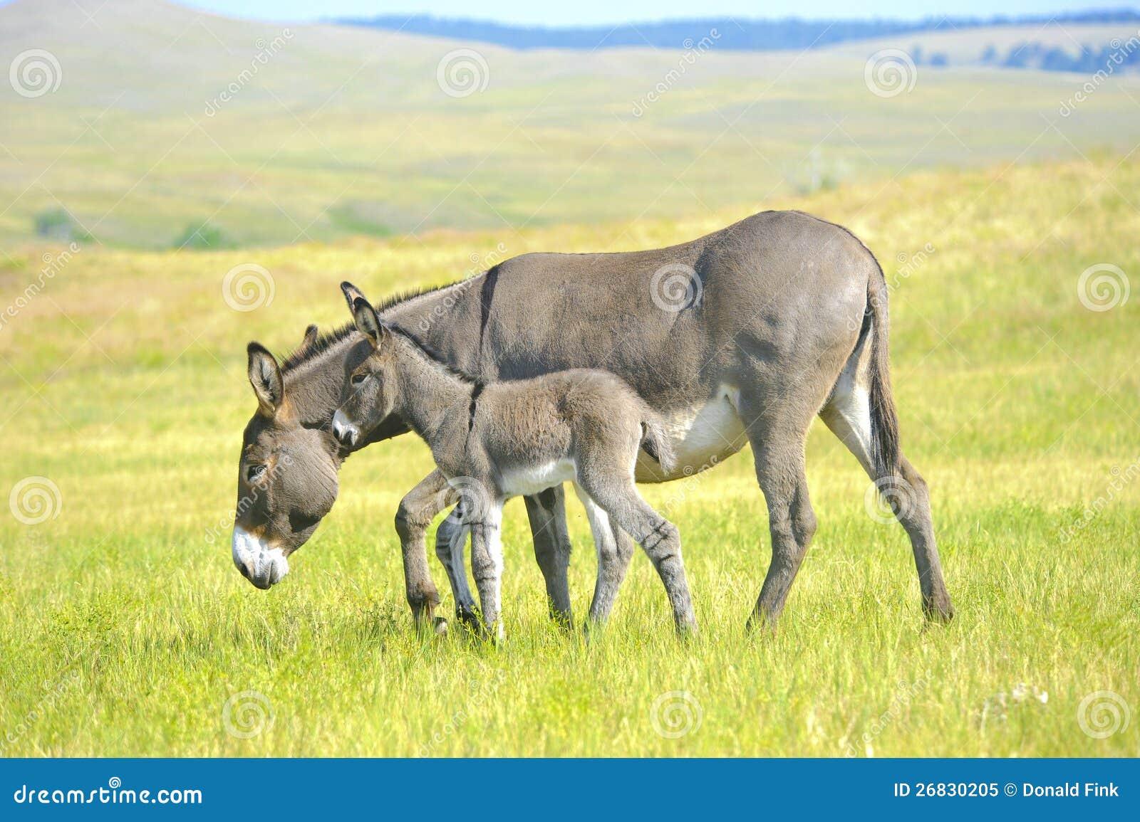 Mother och behandla som ett barn burroen