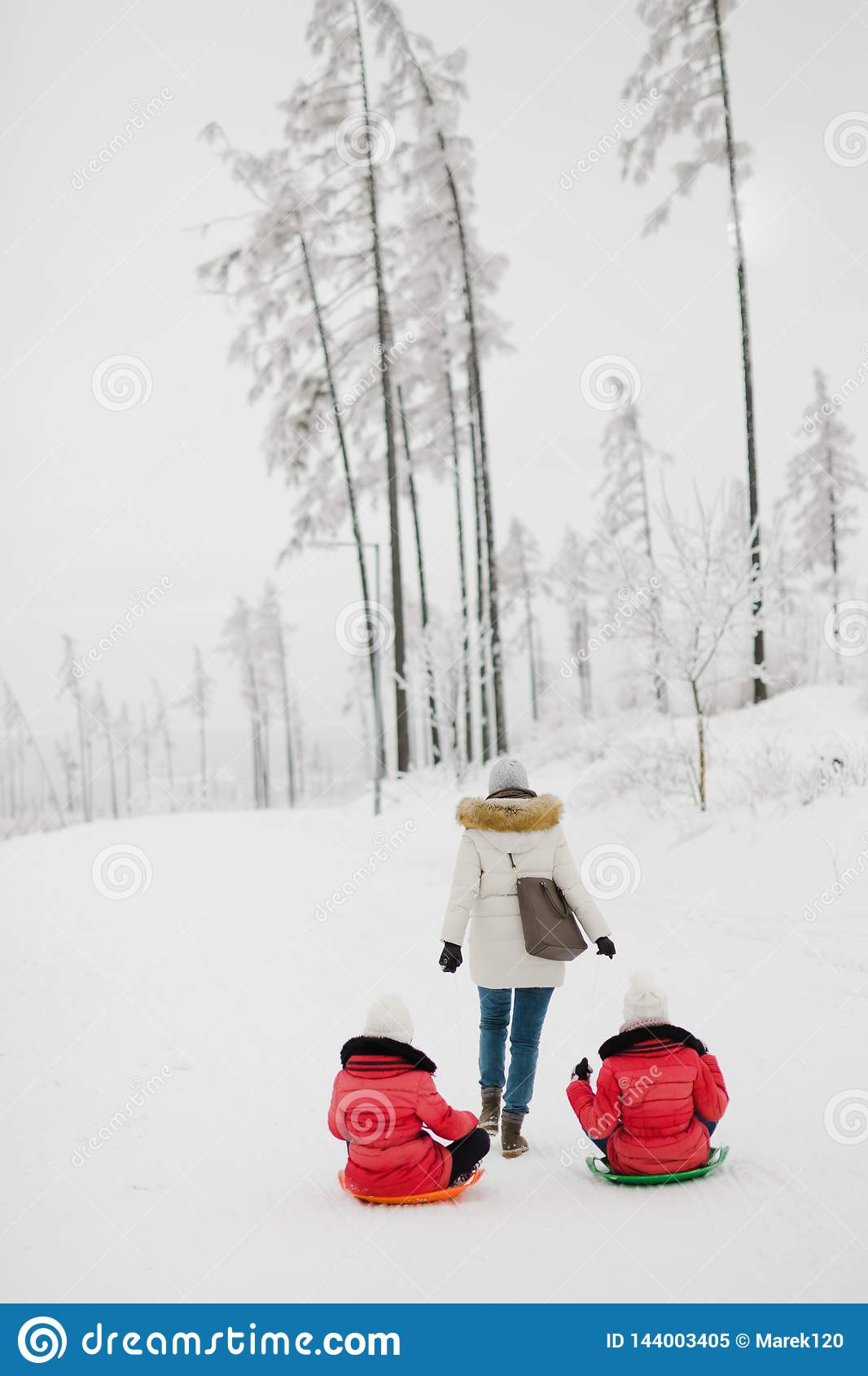 Mother is pulling her two daughters on sledge - winter day