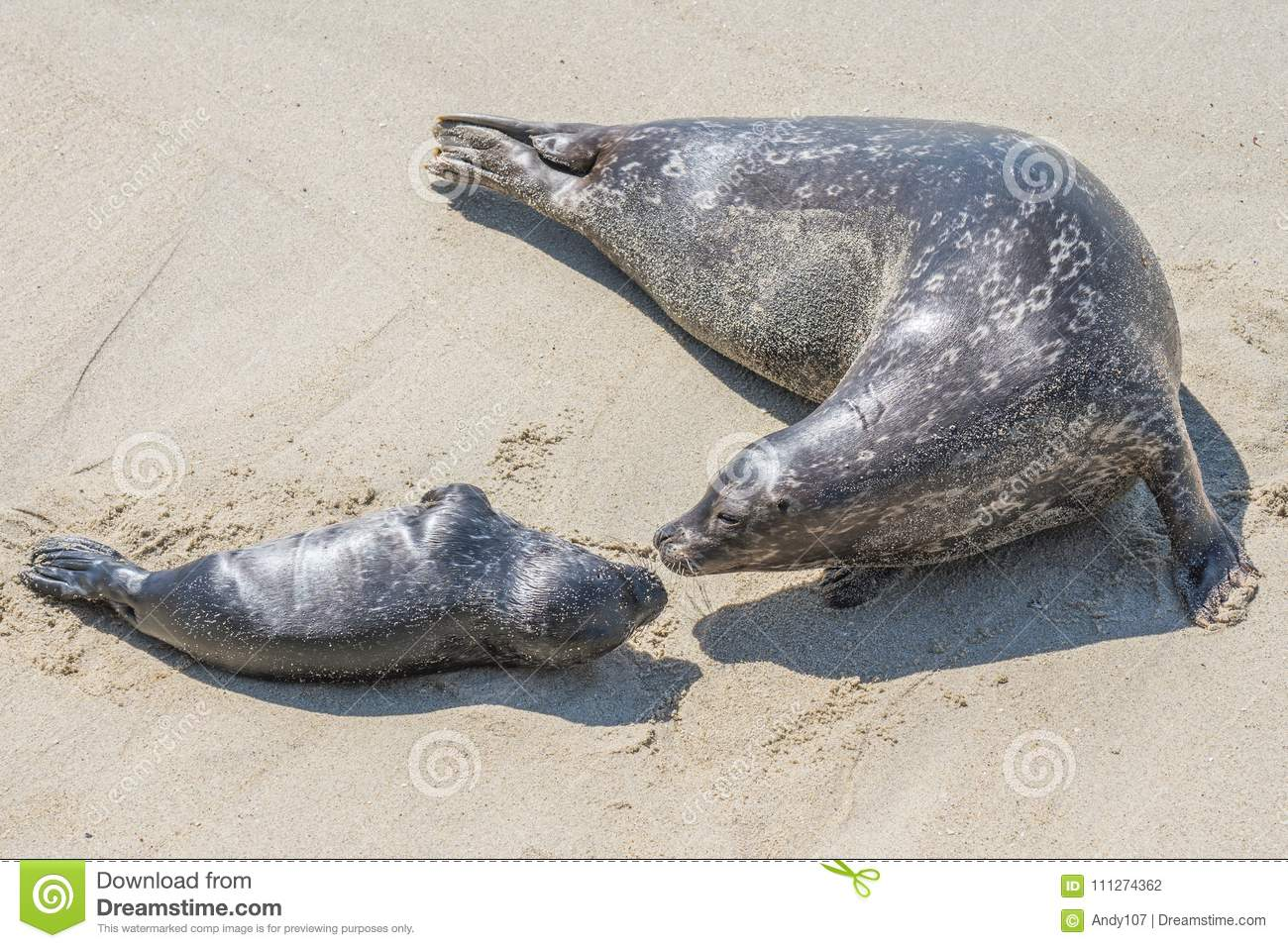 Mother and pup seal on the beach