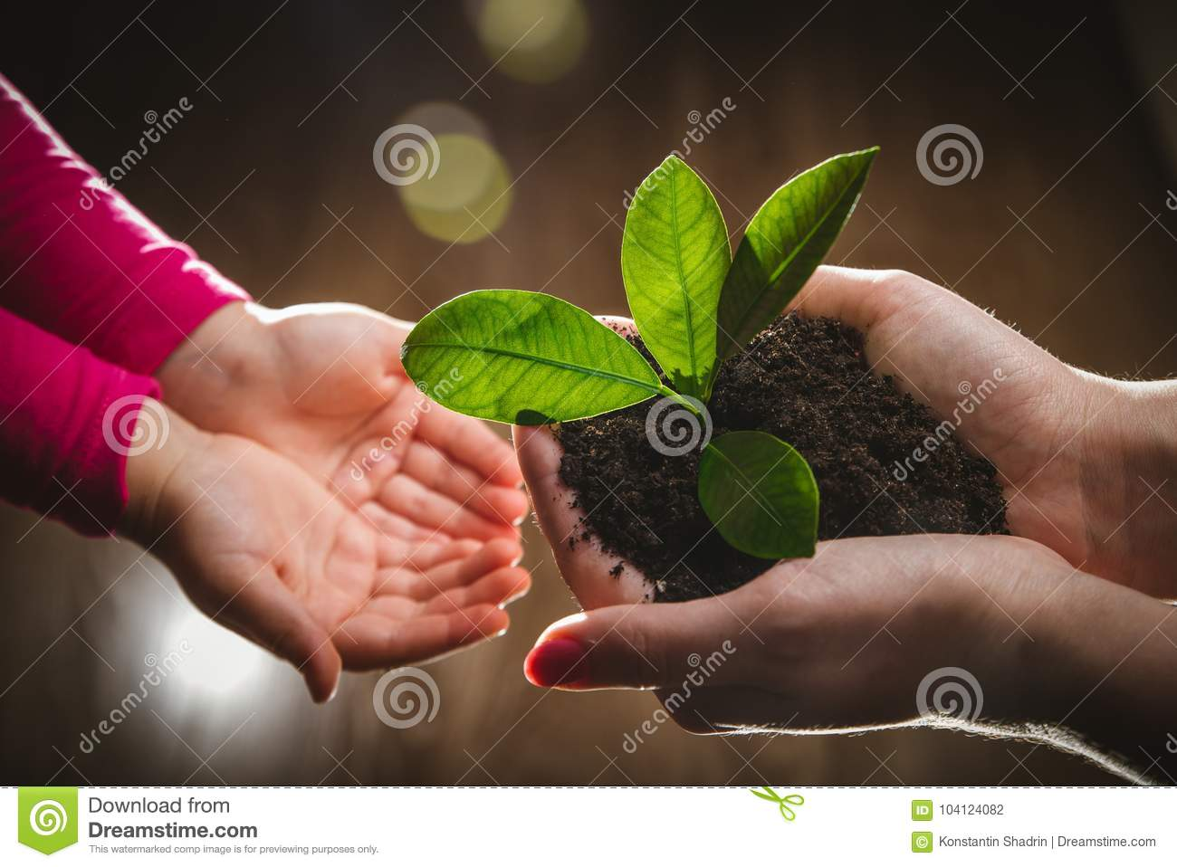 Mother`s hand giving young tree to a child for planting together in green nature background