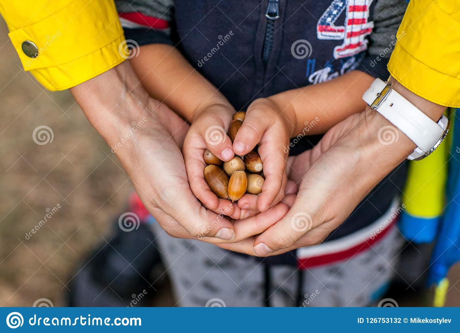 Little kid is holding acorns at his small hands with help of mother