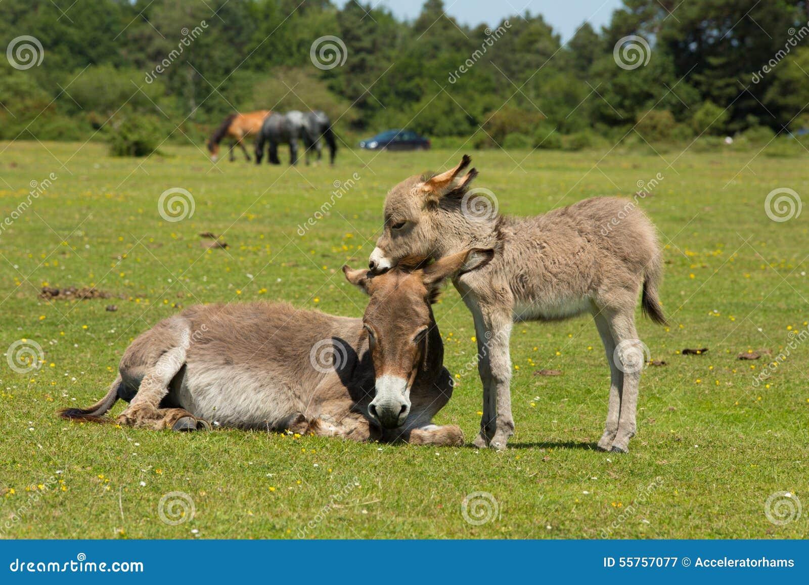 mom make love with donkey