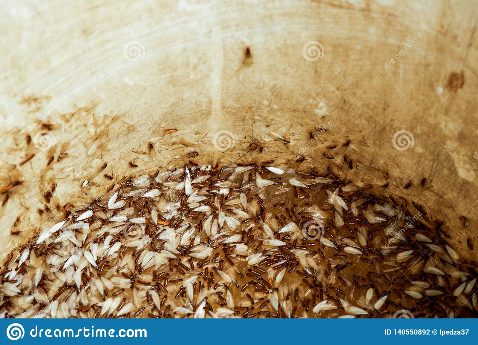 Moths or termites in a water tank