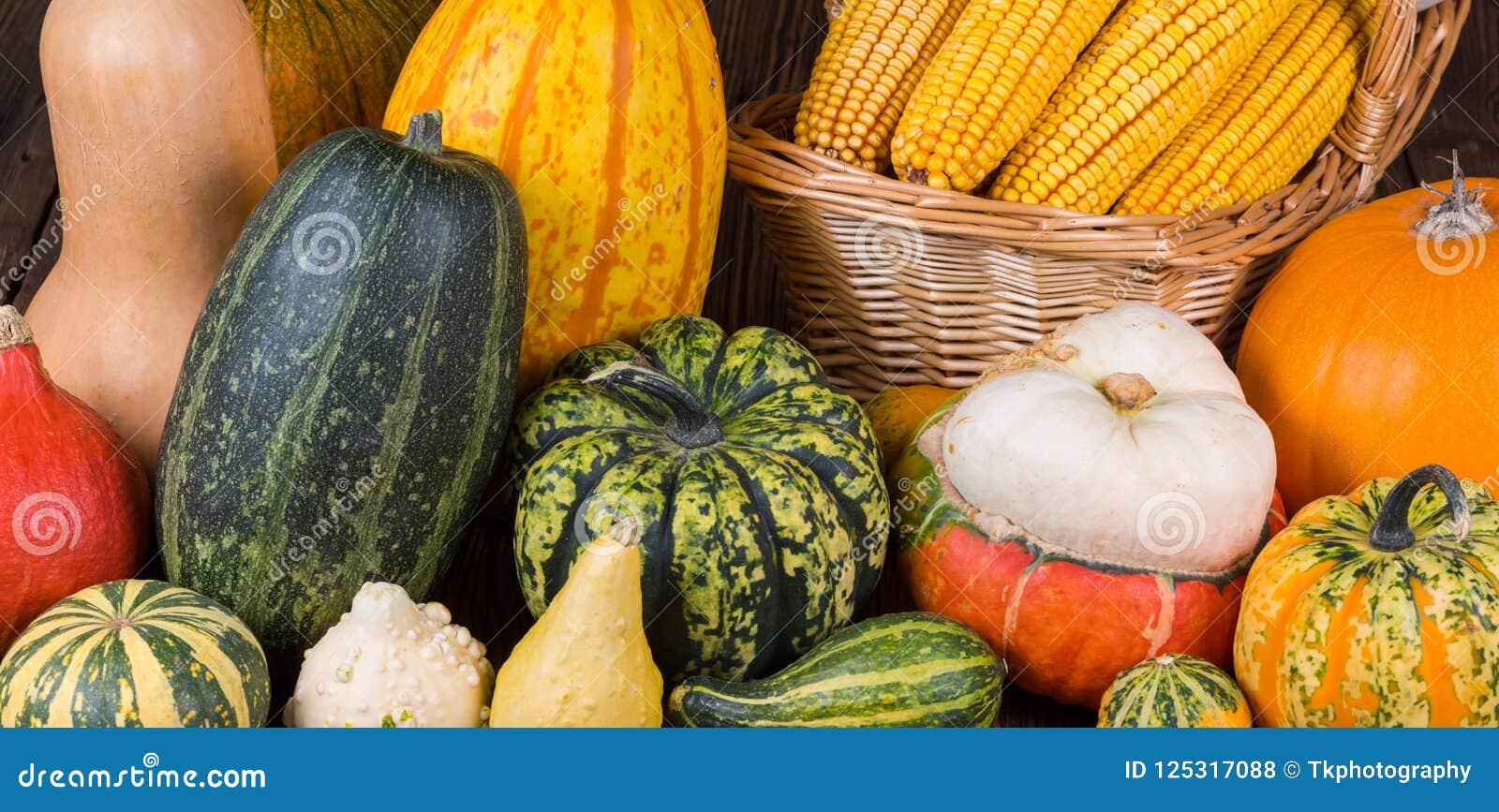 Motif d Autumn Thanksgiving avec un panier plein avec des épis de maïs et de différents potirons colorés