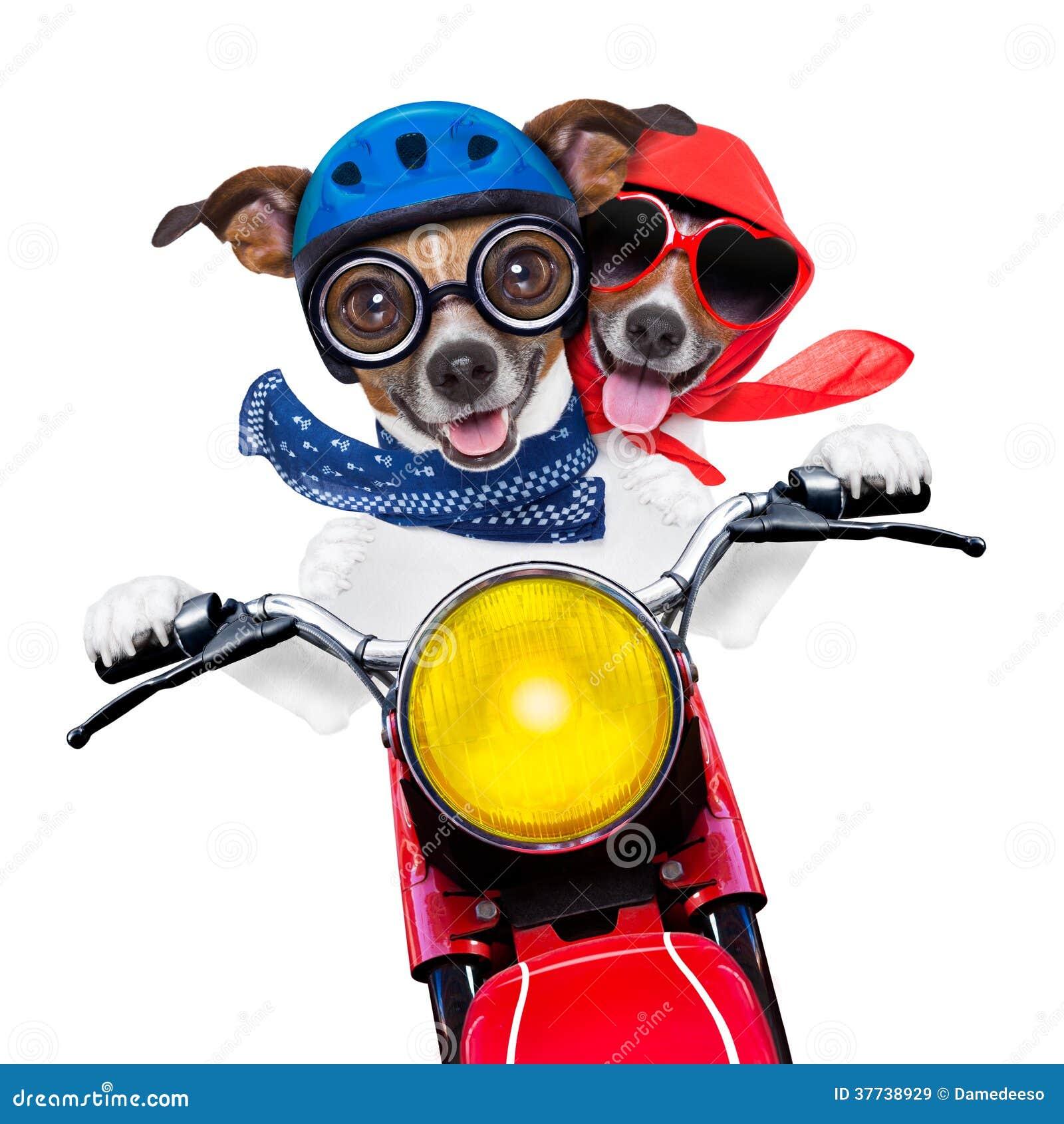 Motorbike couple of dogs