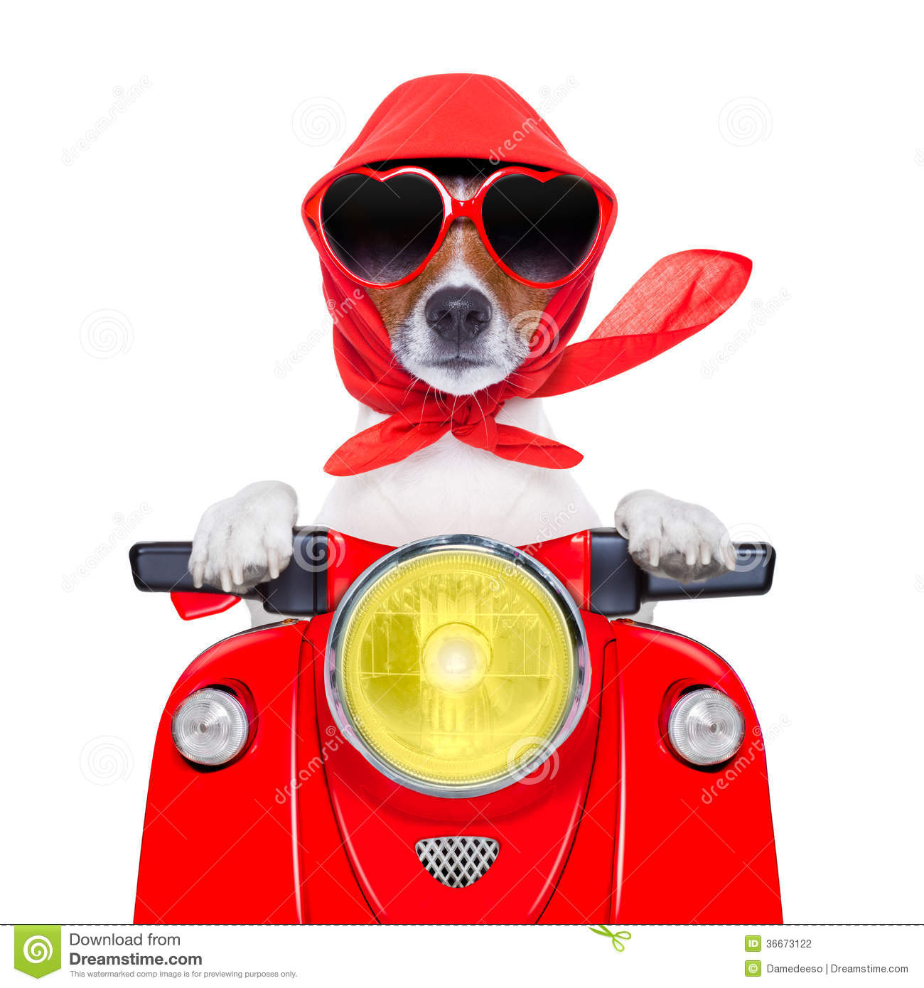 Motorcycle Dog Summer Dog Stock Photography Image 36673122