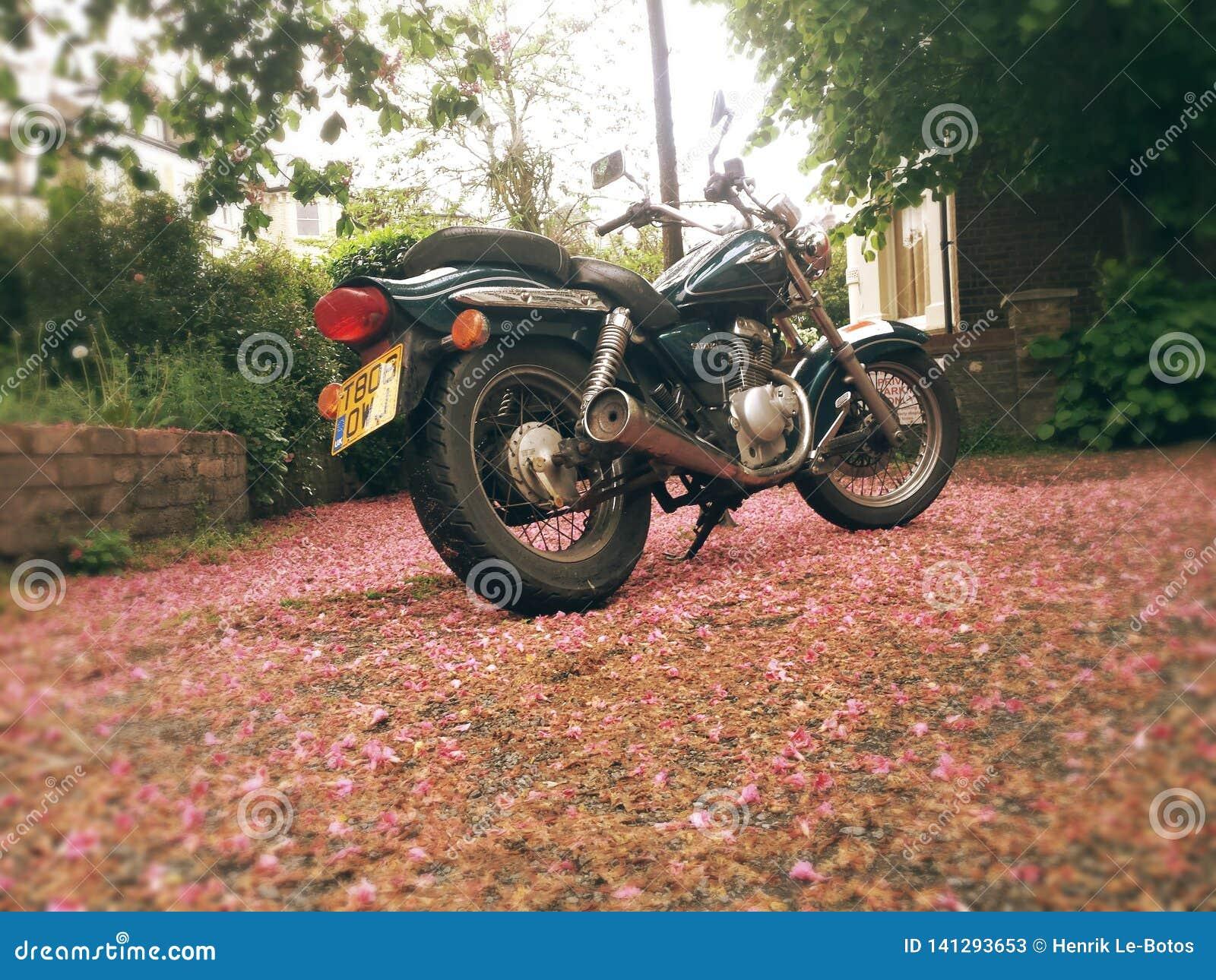 Motorradleitartikel Suzuki-Plünderers gz125