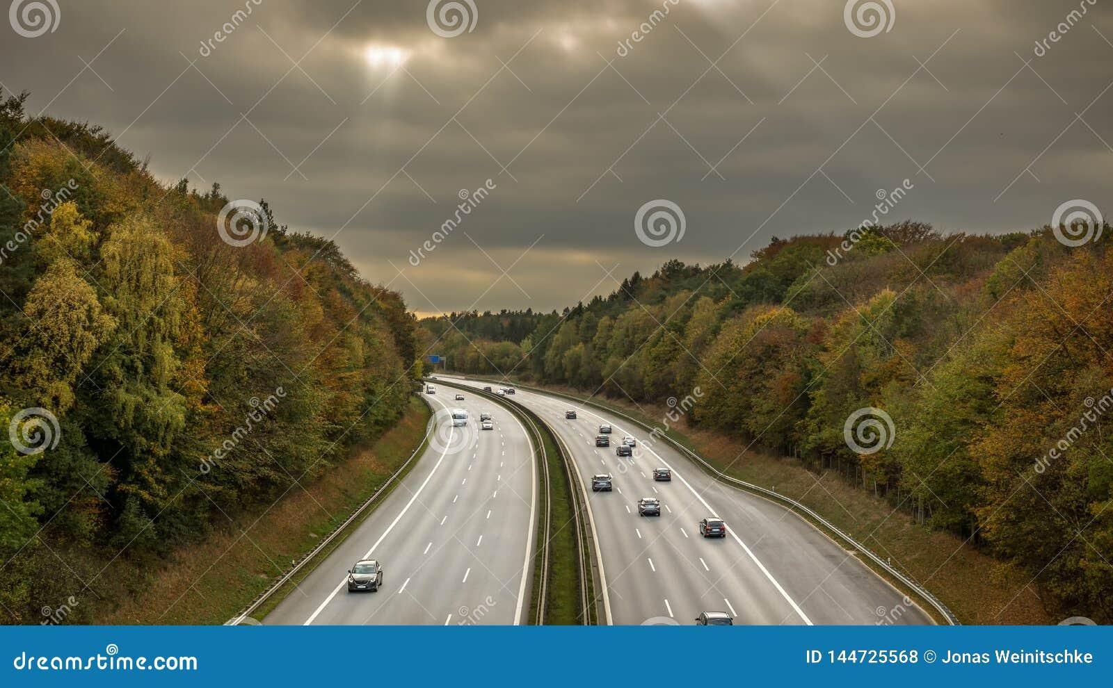 Motorway till och med ett skogsbevuxet område