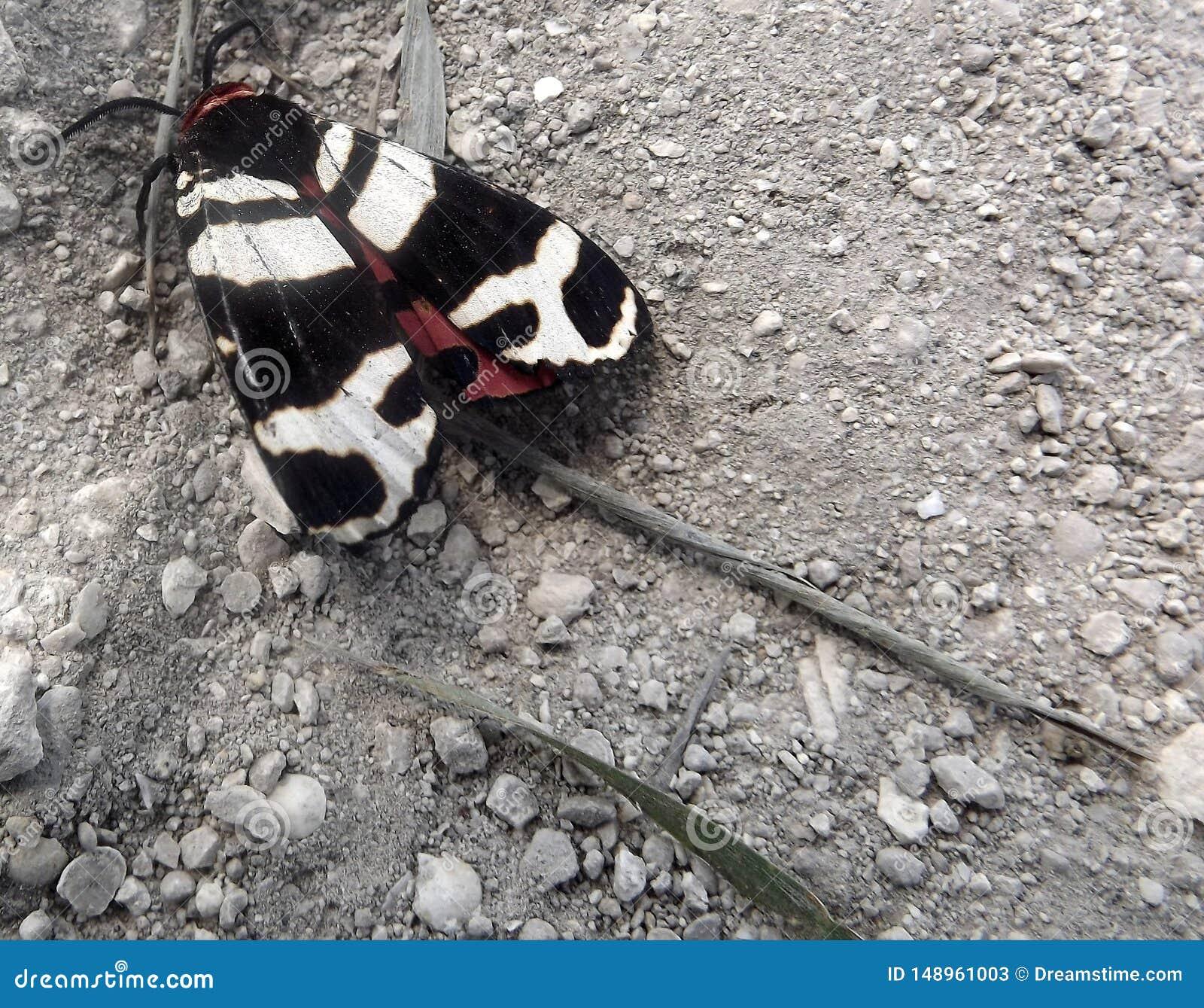 Motte von der Krim