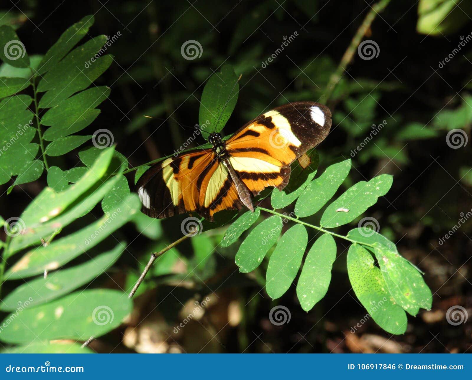 Motyl po środku rośliien