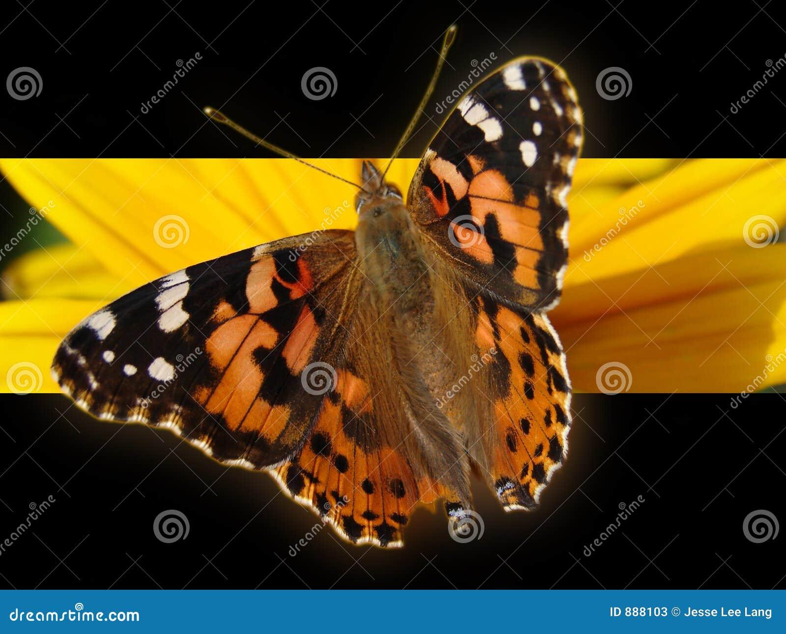 Motyl tło