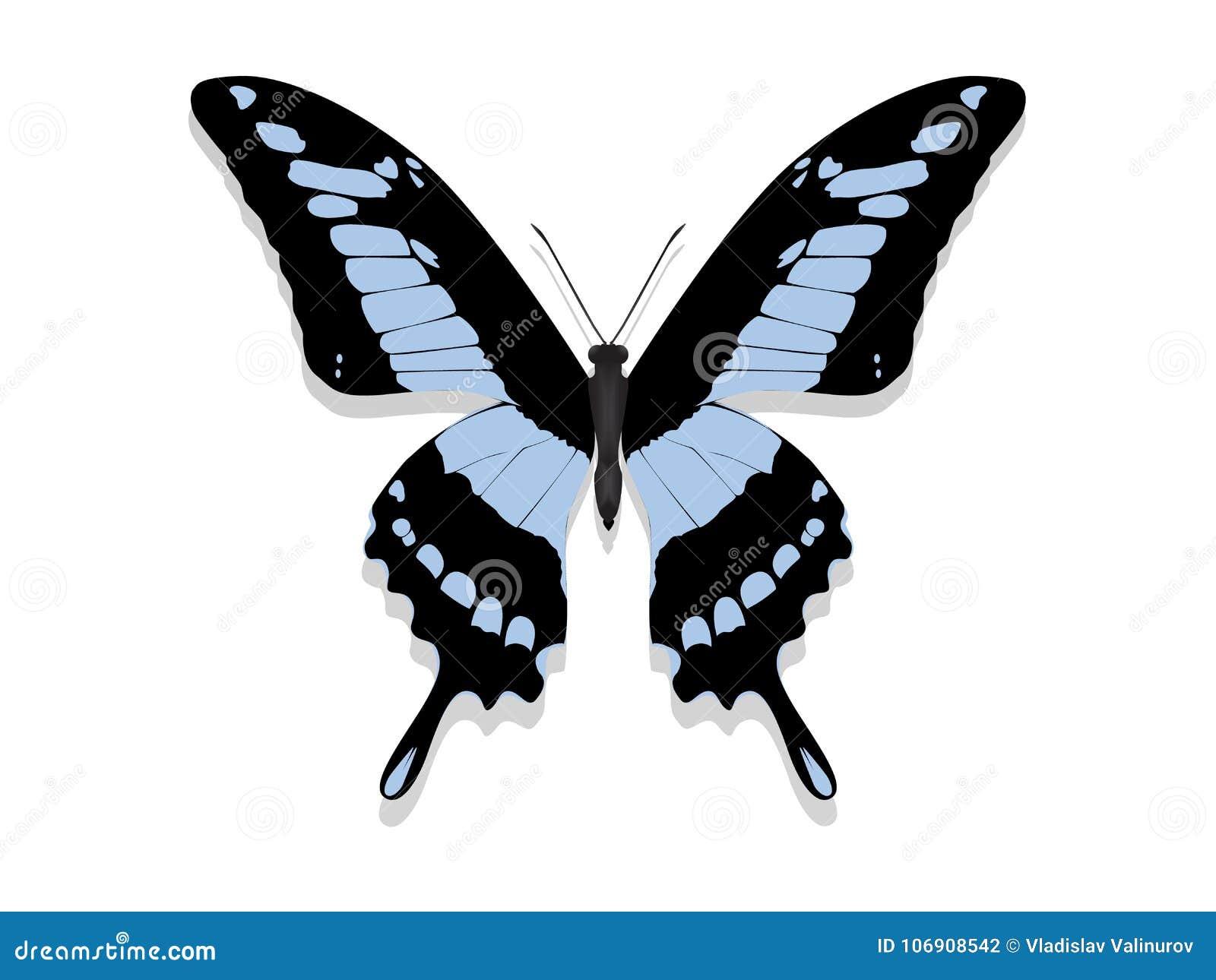 Motyl z czerni skrzydłami, błękitów wzory