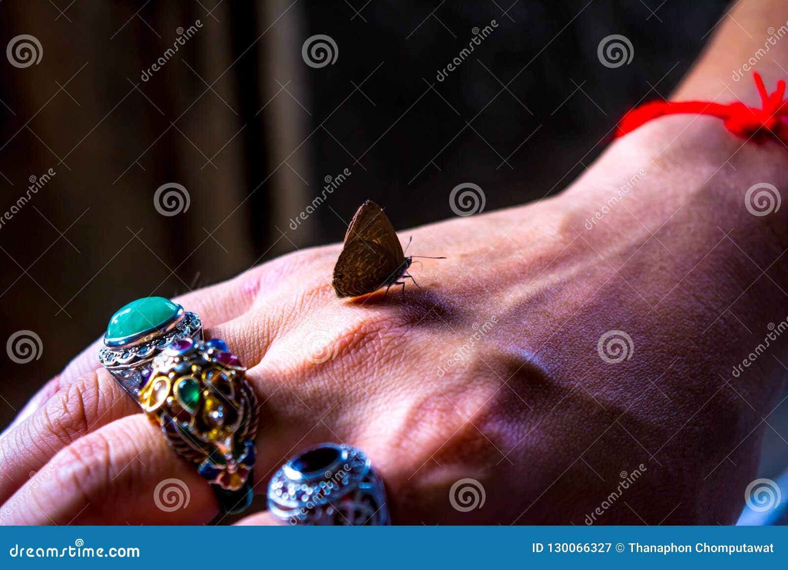 Motyl zatrzymuje latać przy jego rękami