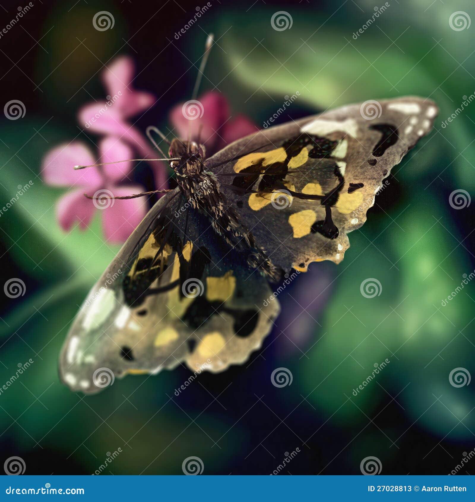 Motyla Skrzydła Wzór - Cyfrowego Obraz