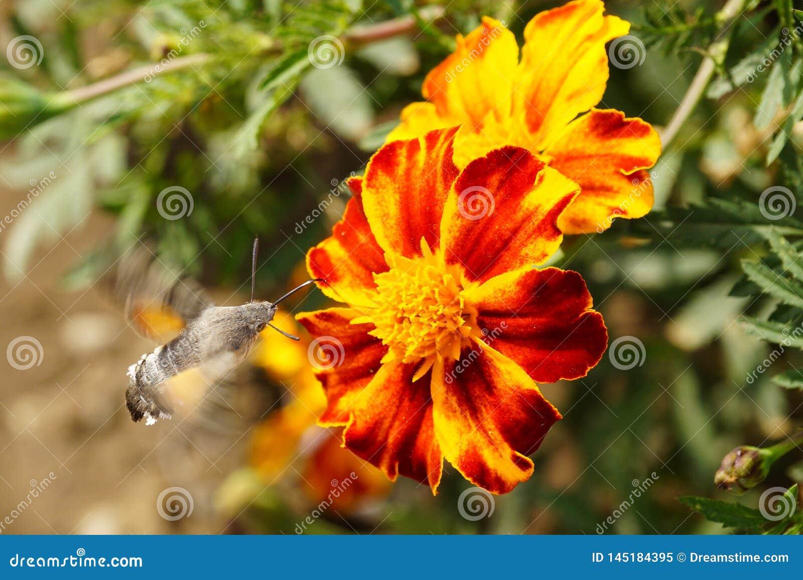 Motyle Lato Naturalny pi?kno Rosja