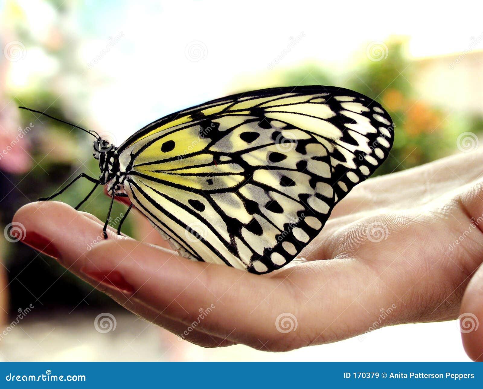Motylia ręka