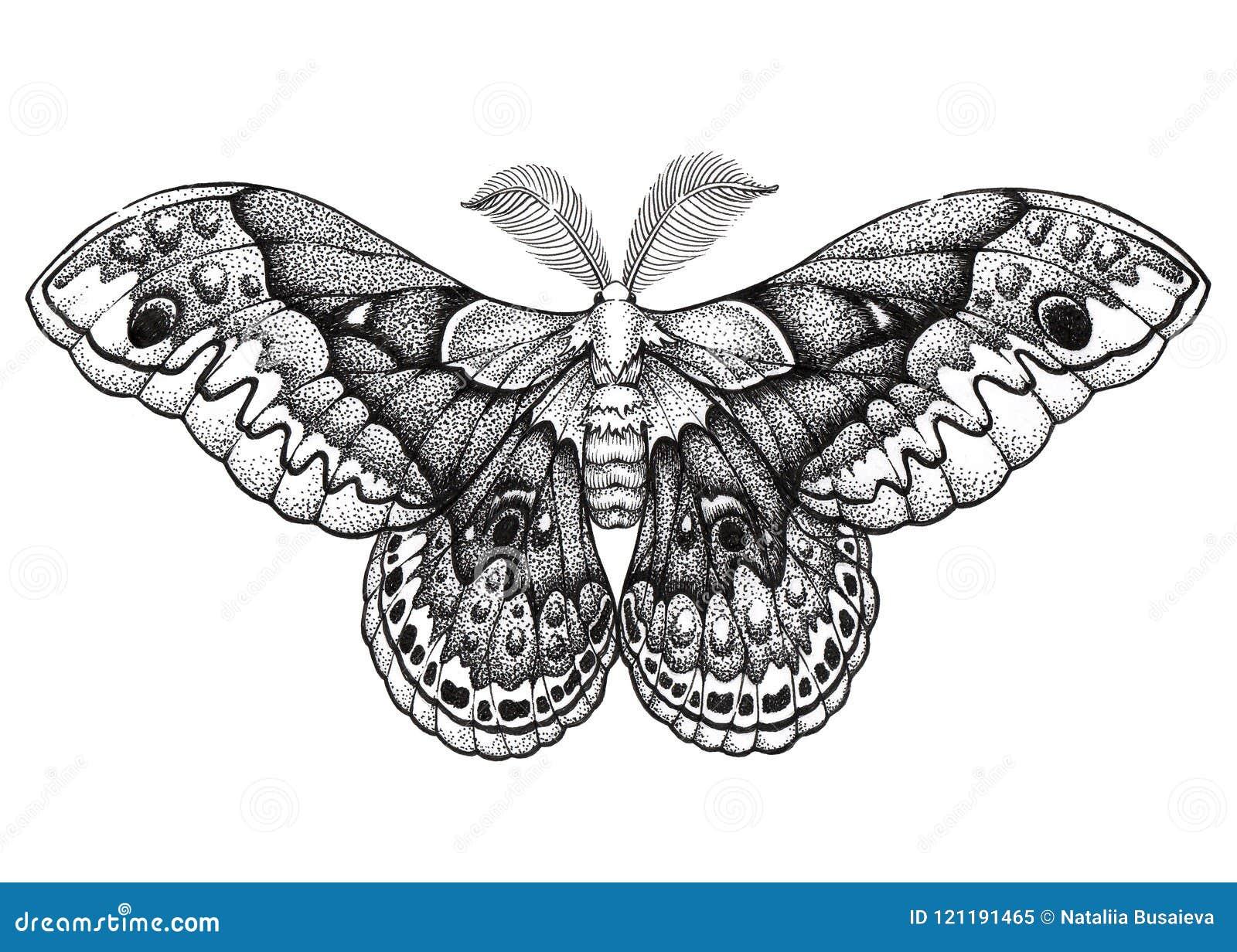 Motylia Tatuaż Sztuka Dotwork Tatuaż Hyalophora Cecropia