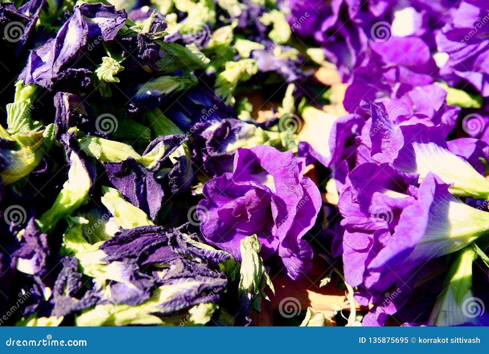 Motyliego grochu kwiat suszy w koszu dla mieszanki z gorącą wodą pić