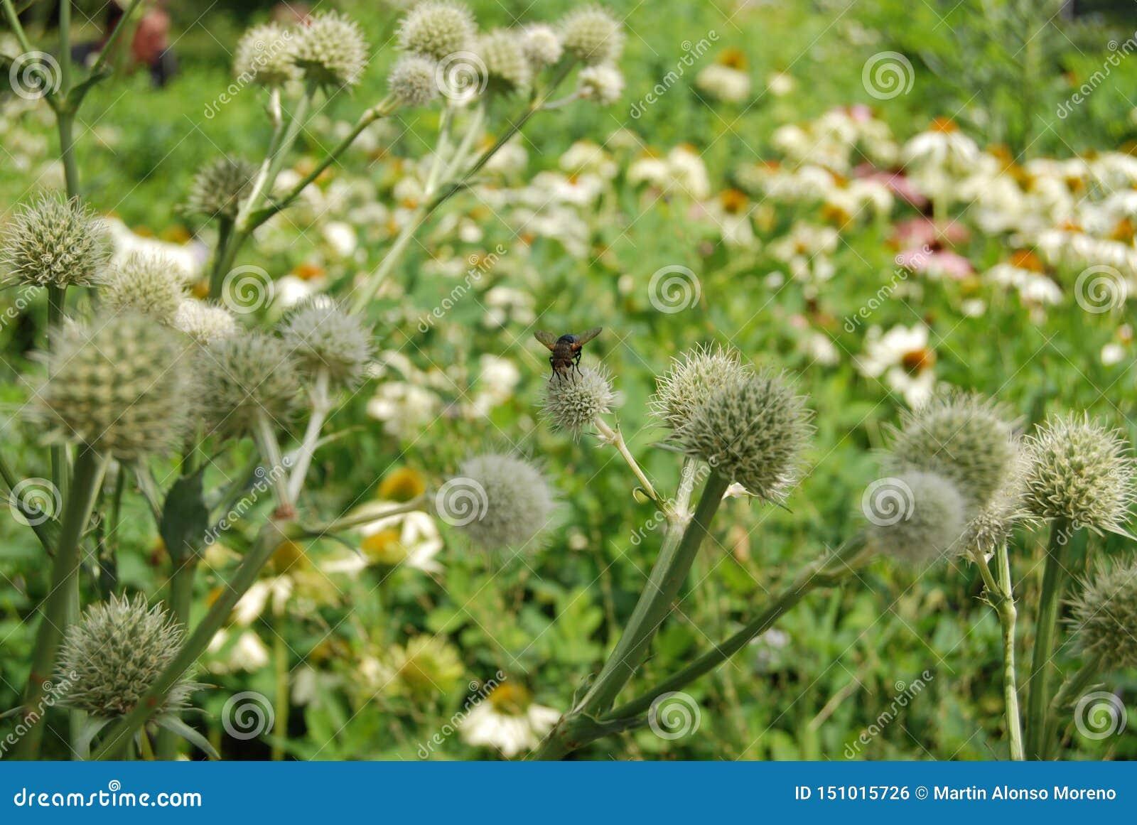 Mouche d Insec au-dessus de la fleur