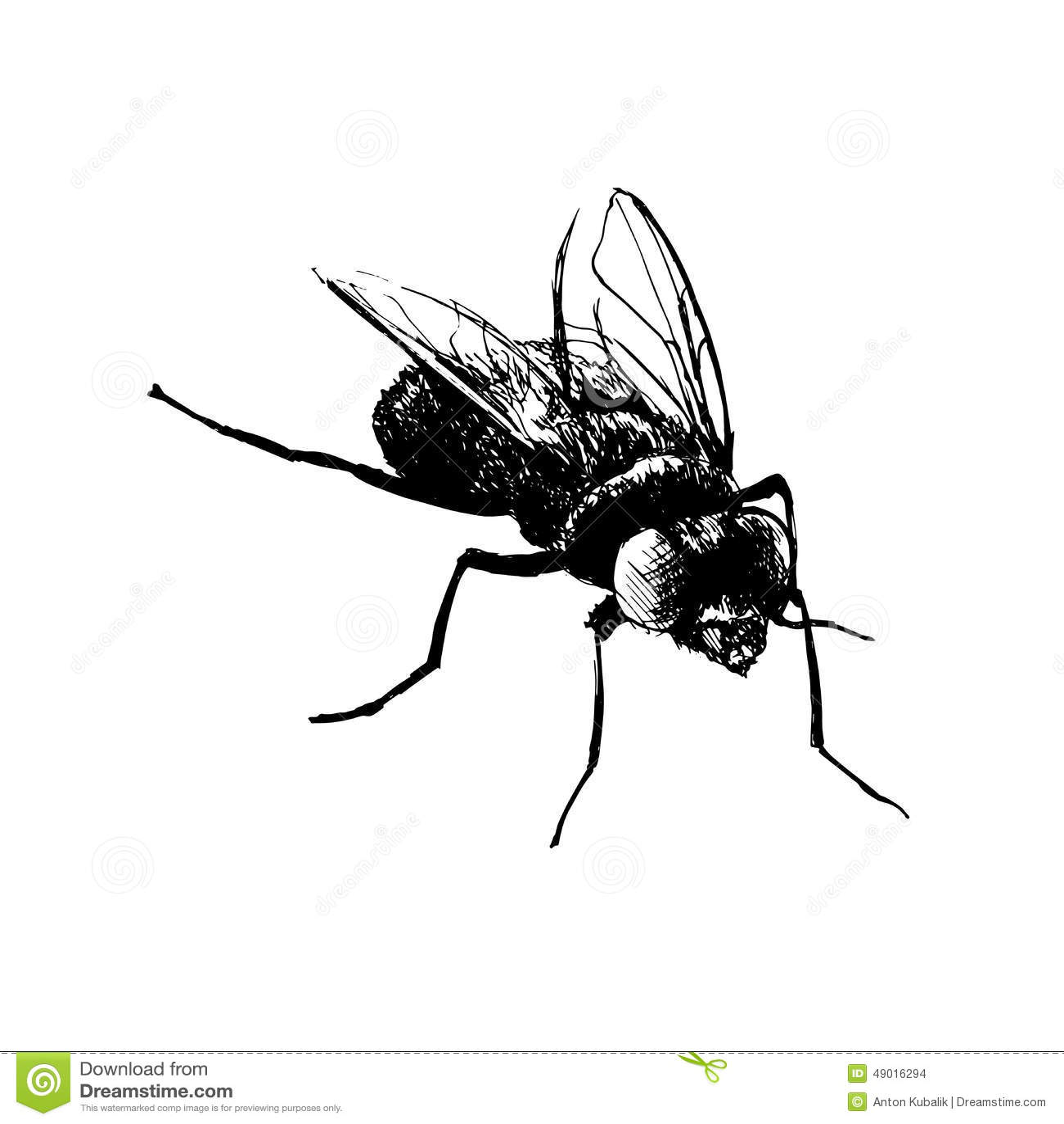 Mouche de dessin de main illustration de vecteur - Dessin de mouche ...