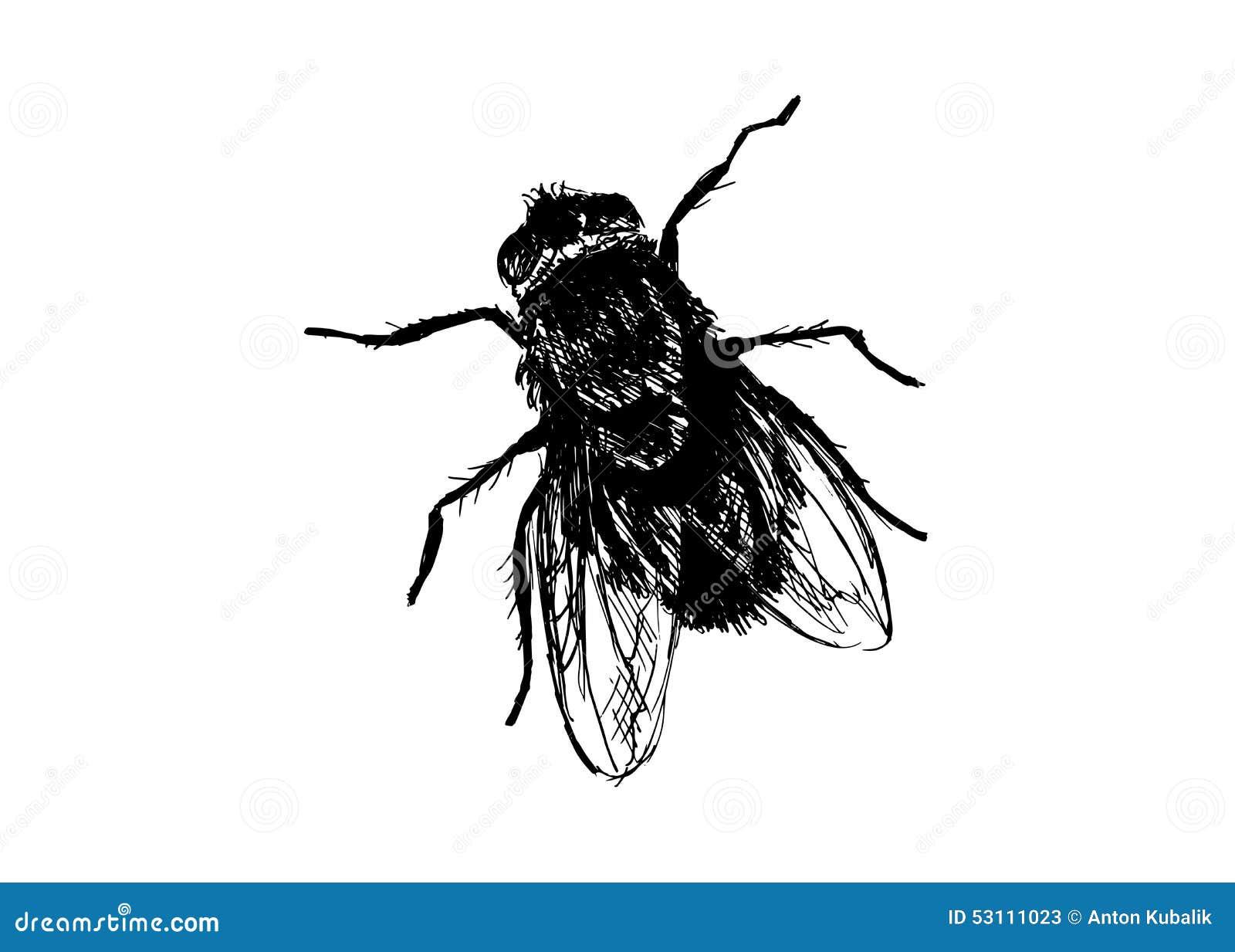 Mouche domestique de dessin de main illustration de - Dessin de mouche ...