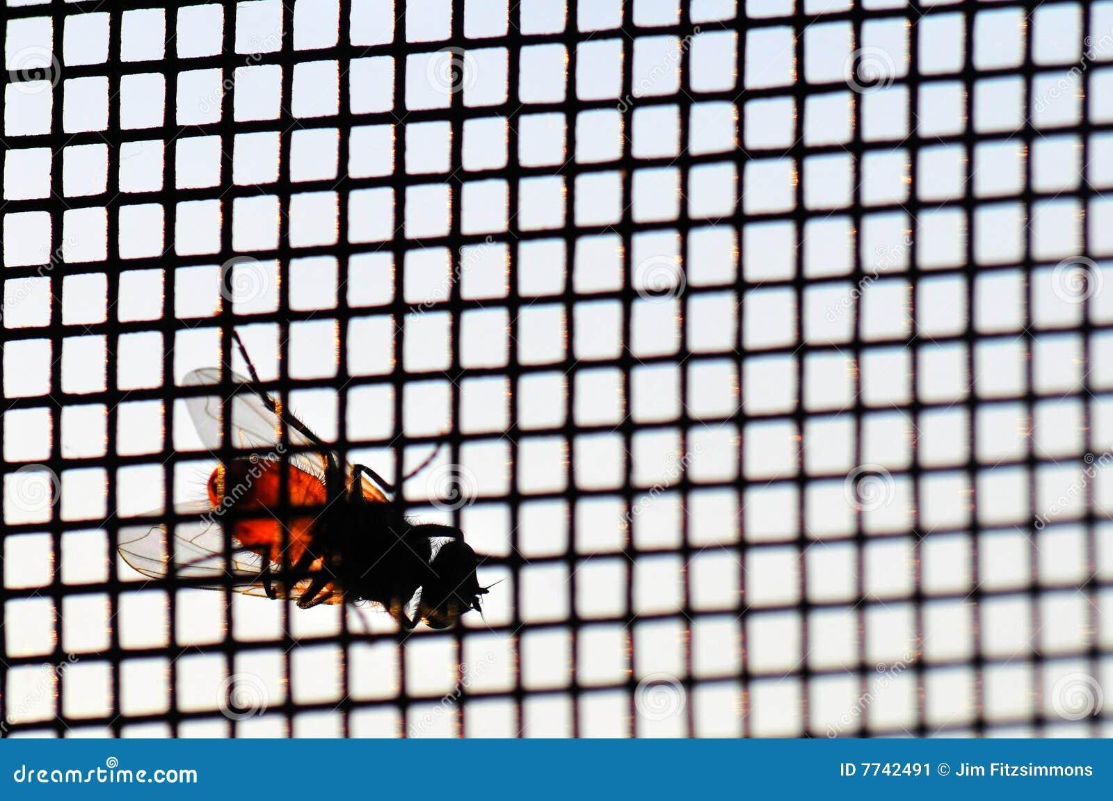 Mouche sur l écran de vent