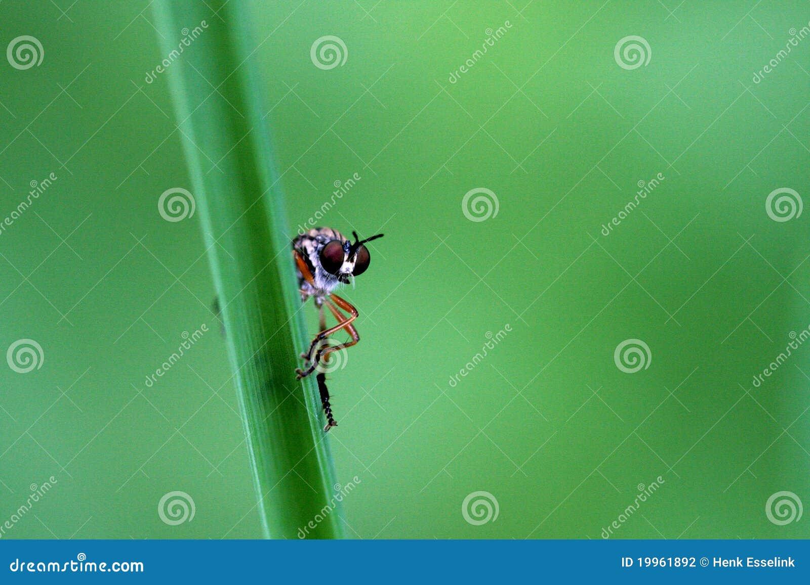 Mouche sur l herbe