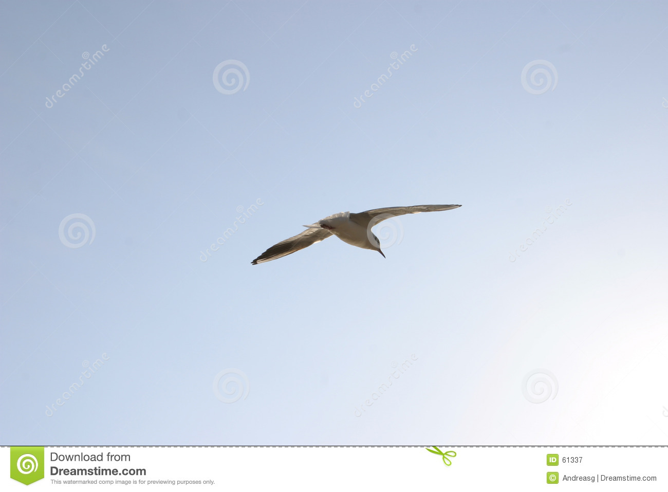 Download Mouette 1 de vol image stock. Image du glissement, saisie - 61337