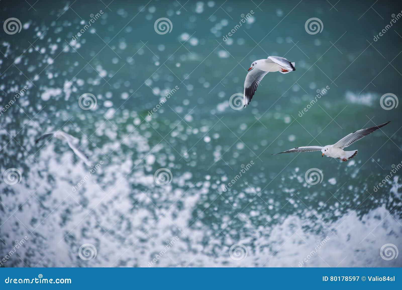 Mouette blanche montant au-dessus de la mer