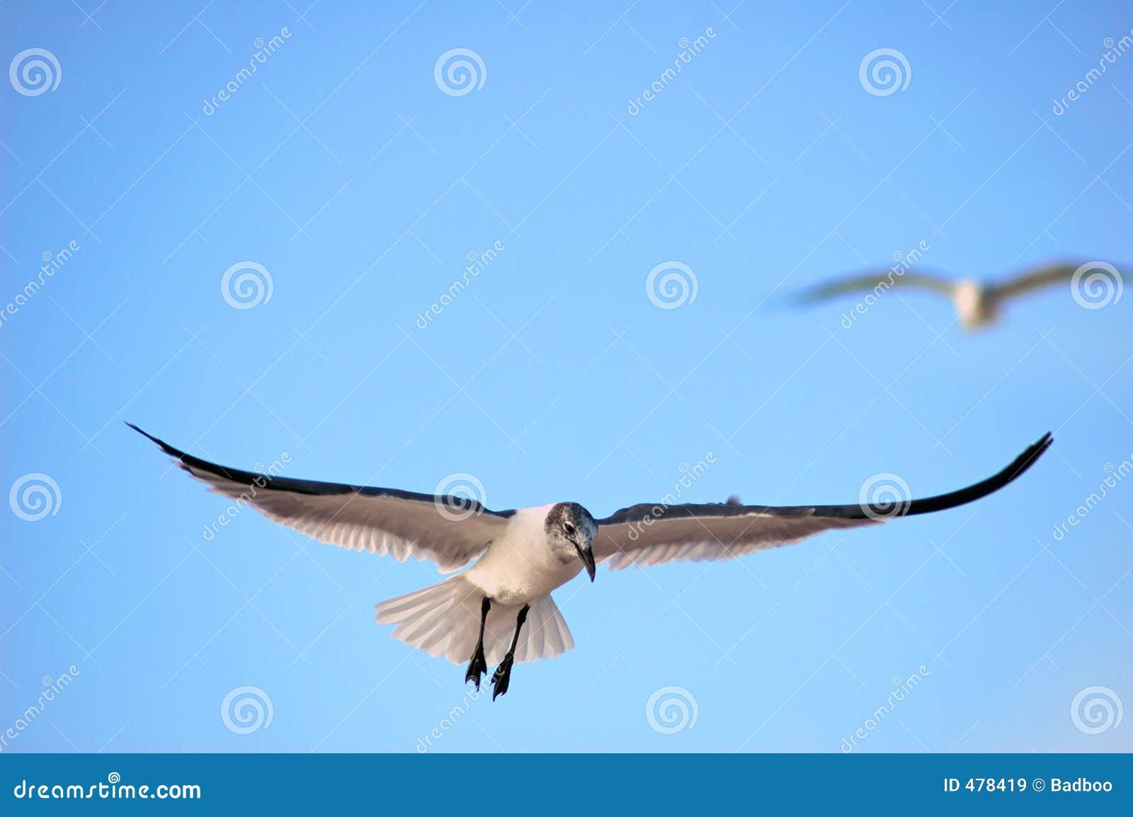 Mouette d atterrissage