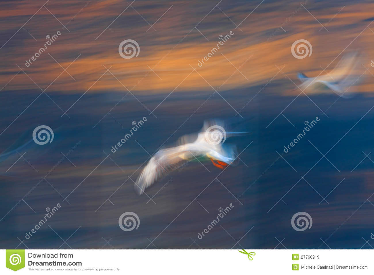 Mouette Jonathan Livingston