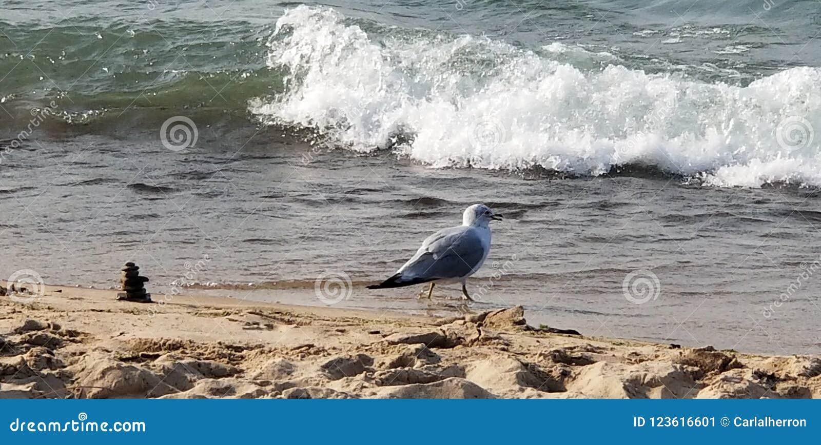 Mouette près de cairn sur le rivage