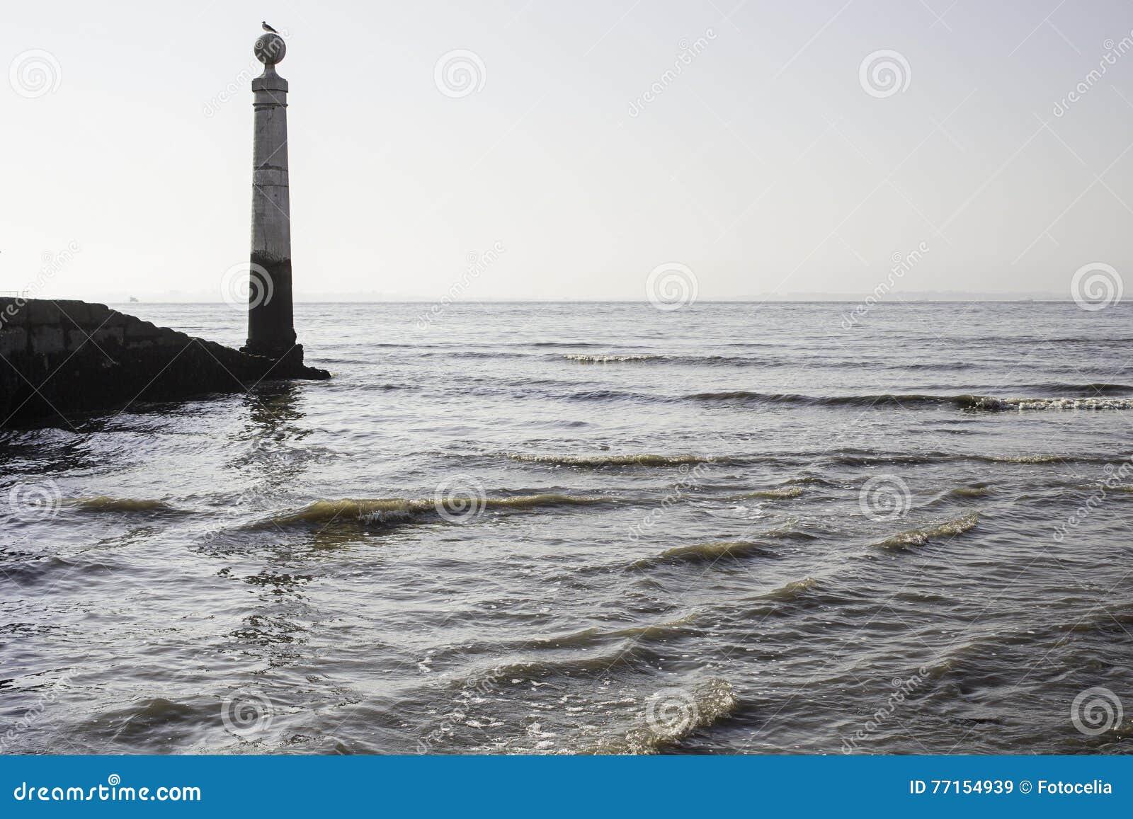 Mouette sur des vagues de mer