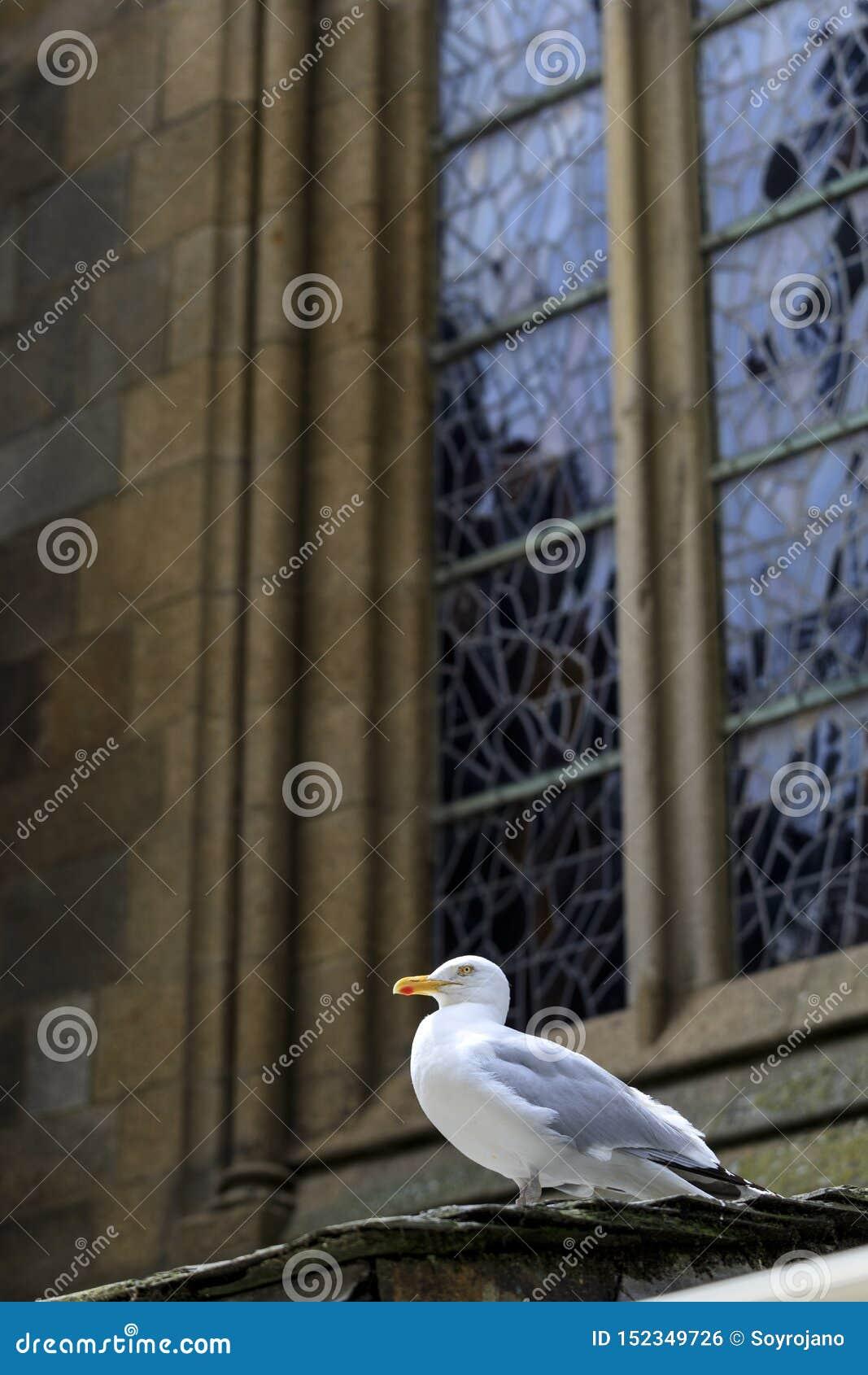 Mouette sur en dehors d une église