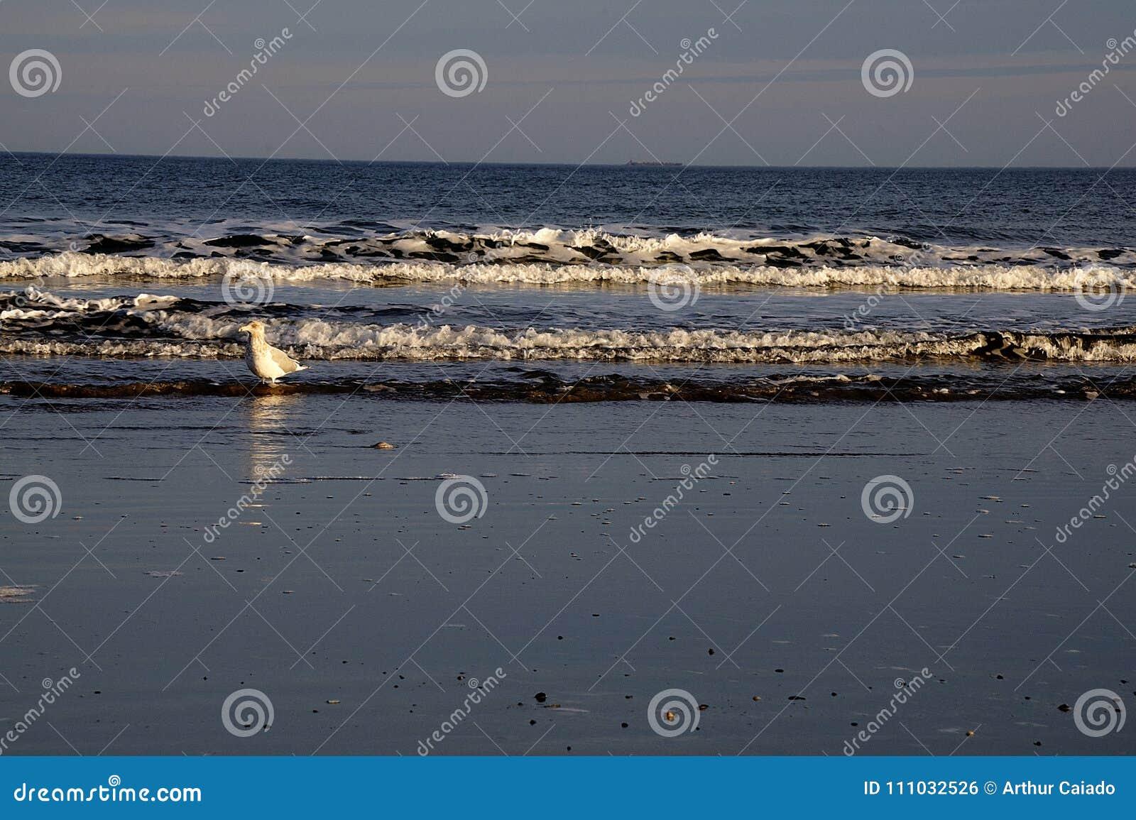 Mouette sur Jenness Beach à Rye, NH