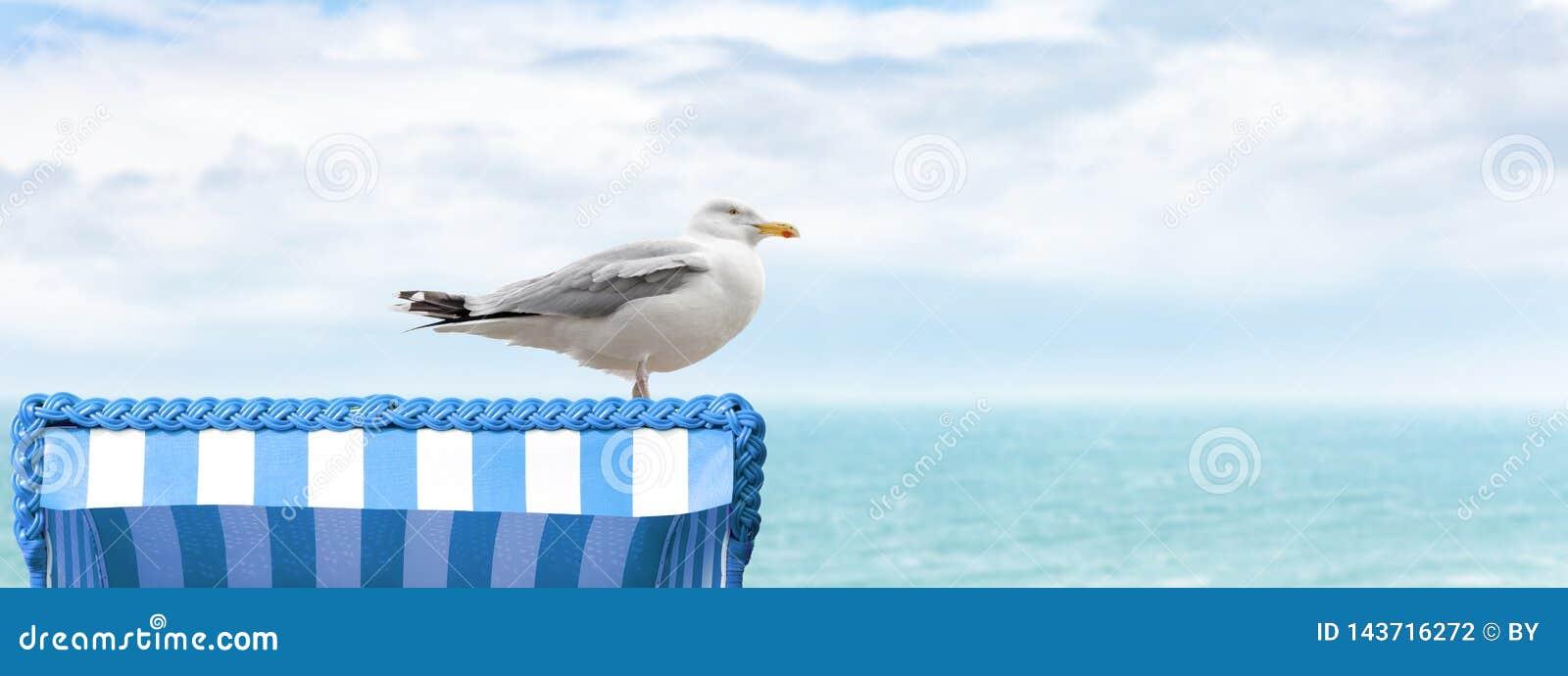 Mouette sur la chaise de plage