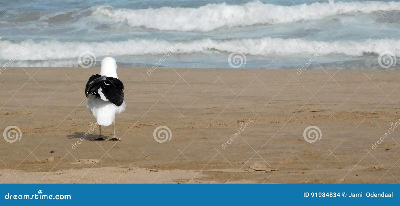 Mouette sur le rivage
