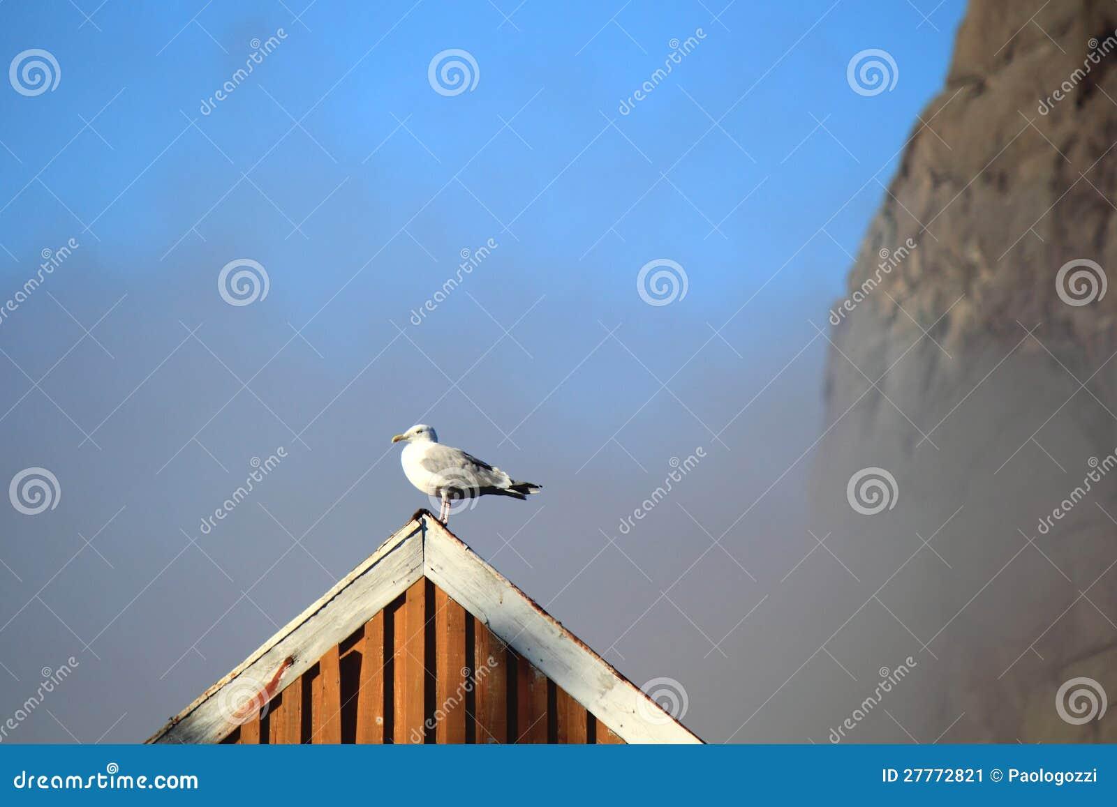 Mouette sur le toit