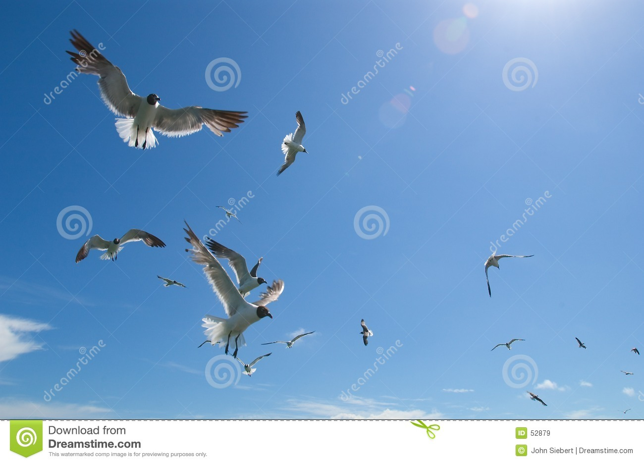 Mouettes #2