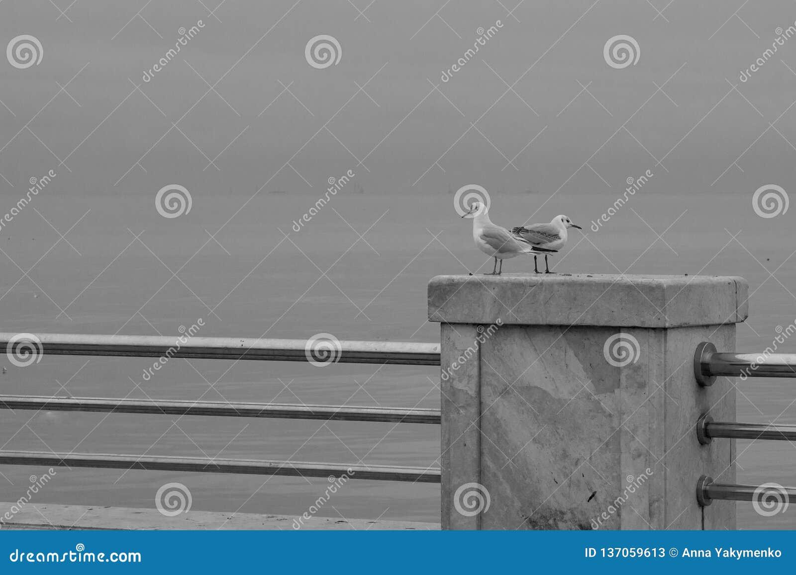 Mouettes debout sur la balustrade du remblai, bord de mer sur le fond de la mer
