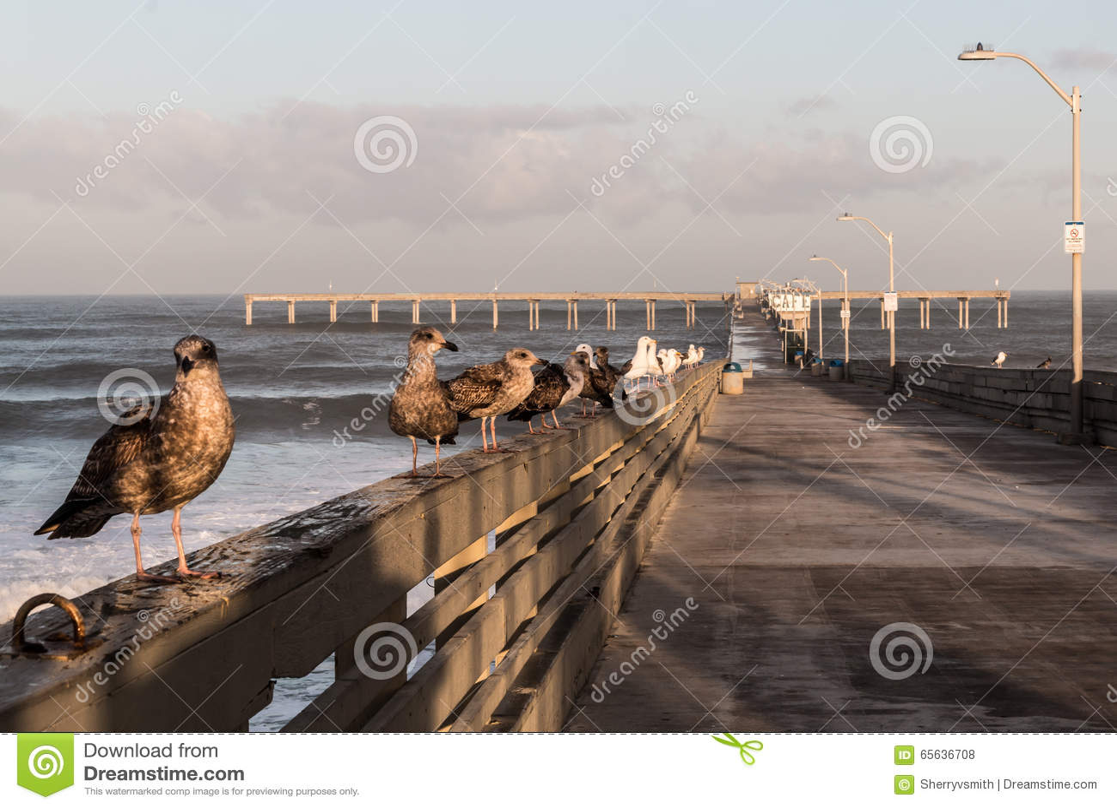 Mouettes sur le pilier de pêche de plage d océan