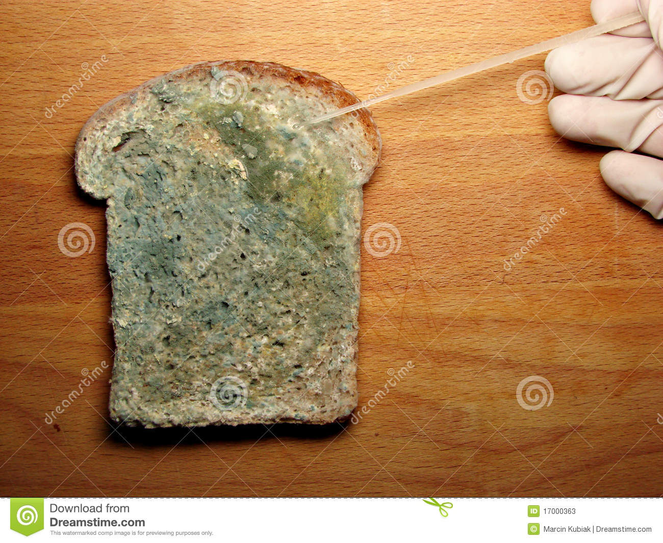 literature review on bread mold Mold health issues are potentially harmful effects of molds molds (us usage british english moulds) are ubiquitous in the biosphere, and mold spores are a common component of household and workplace dust the united states centers for disease control and prevention reported in its june 2006 report, 'mold prevention strategies and possible health effects in the aftermath of hurricanes and.