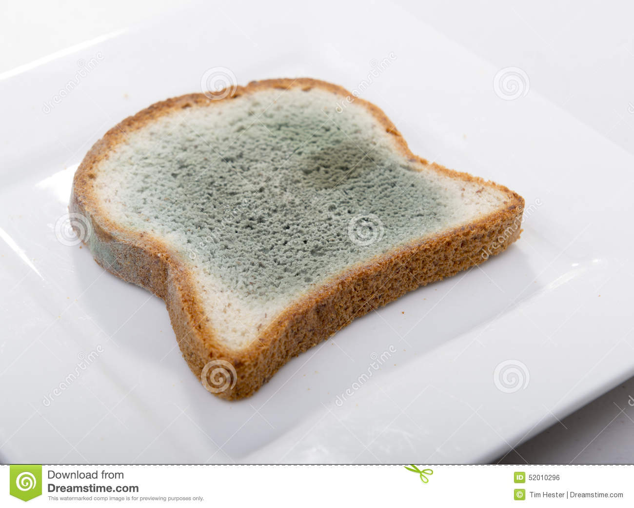 Mould growing rapidly on mouldy bread in green and white spores.