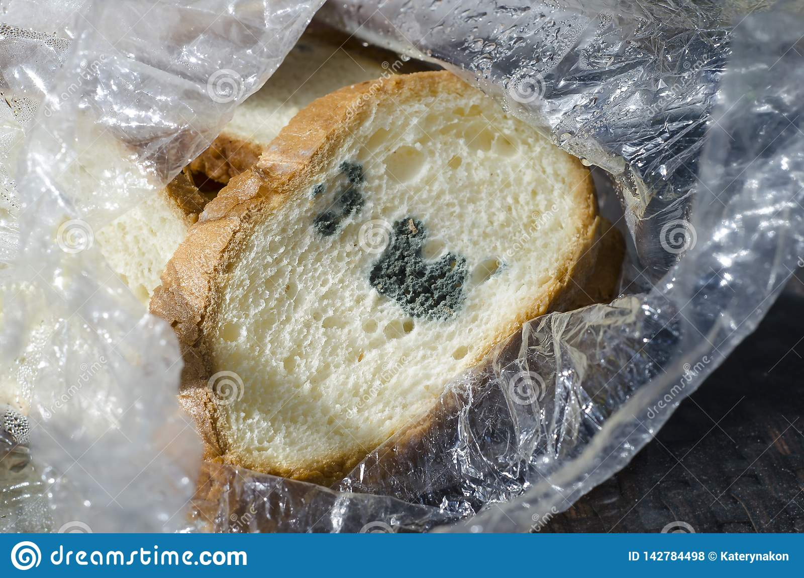 Mouldy Bread, Penicillium Mold Stock Photo - Image of ...