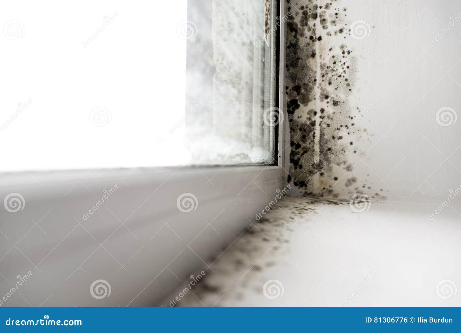 Moule dans le coin de la fenêtre
