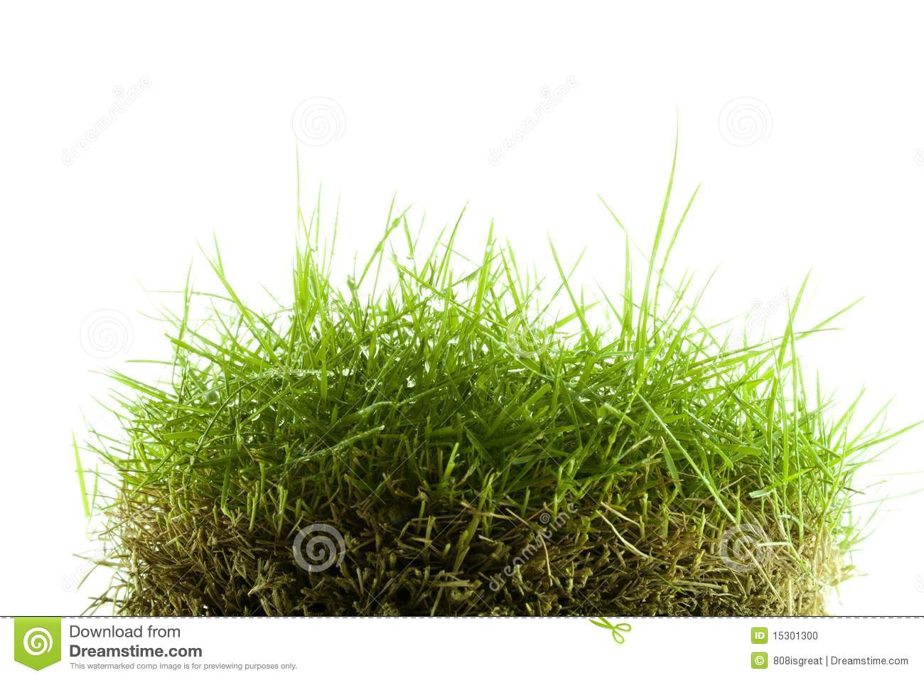 Mound of zoysia wet grass stock photo image 15301300 for Mounding grass